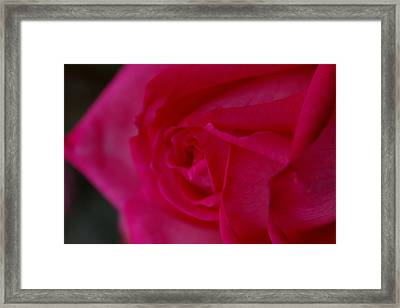 Rose6 Framed Print by Kennith Mccoy