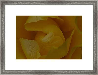 Rose7 Framed Print by Kennith Mccoy
