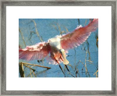 Da203 Roseate Spoonbill By Daniel Adams Framed Print