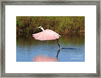 Framed Print featuring the photograph Roseate Spoonbill  by Jennifer Zelik