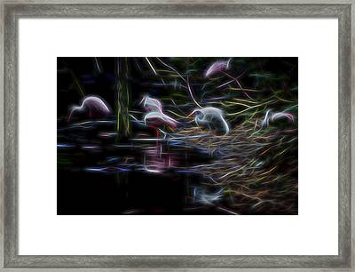 Framed Print featuring the digital art Roseate Spoonbills 3 by William Horden