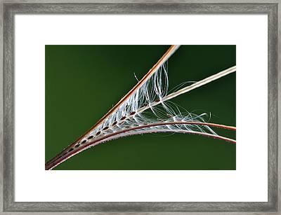 Rosebay Willowherb Seed Pod Framed Print