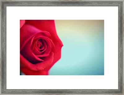 Roseblue Framed Print