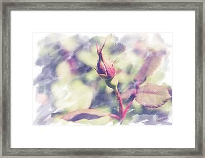 Rosebud Framed Print by Eric Ziegler