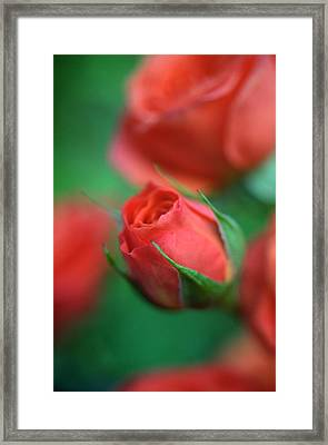 Rosebud  Framed Print by Kathy Yates