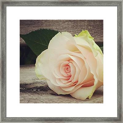 Rosebud On Wood Framed Print