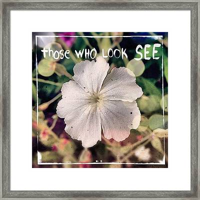 #rosecampion #blooming Today. #white Framed Print