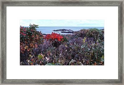 Rosehip Framed Print by Mim White