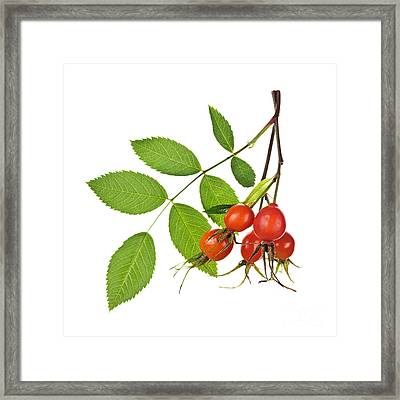Rosehips On White Framed Print