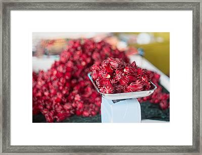 Roselle Fruit Framed Print