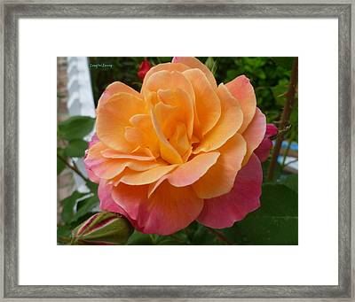 Framed Print featuring the photograph Rosemary And Thyme by Lingfai Leung