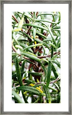 Rosemary's Babies Framed Print by French Toast