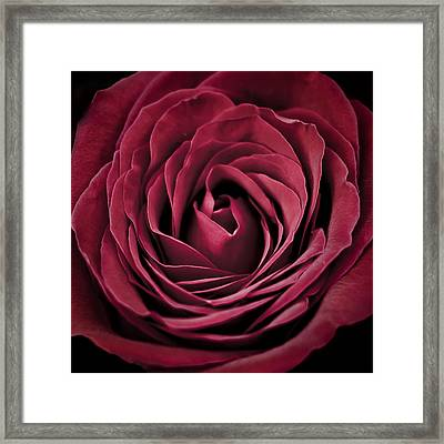 Framed Print featuring the photograph Roses Are Red by Hawaii  Fine Art Photography