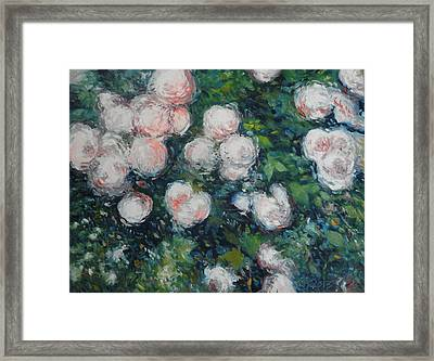 Roses At Diemersfontein Cape Town South Africa Framed Print by Enver Larney