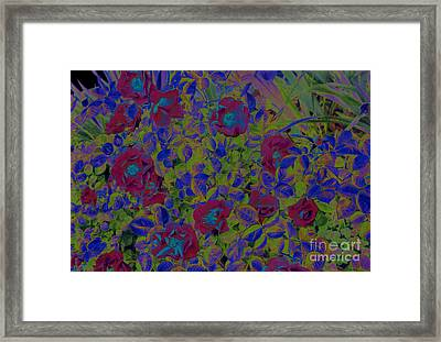 Framed Print featuring the photograph Roses By Jrr by First Star Art