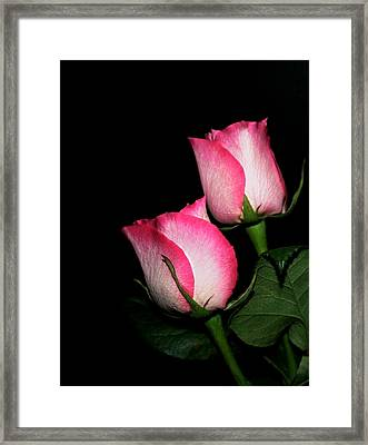 Roses Framed Print by Cathy Harper