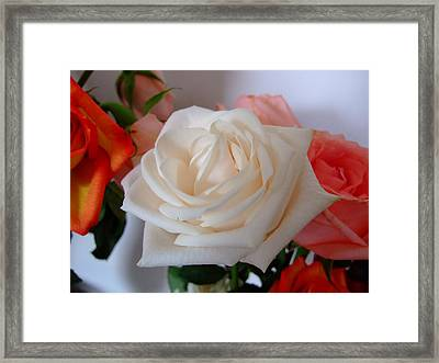 Framed Print featuring the photograph Roses by Deborah DeLaBarre