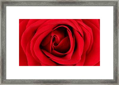 Roses For Life  Framed Print
