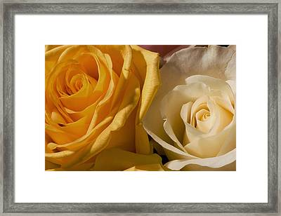 Roses For The Occasion Framed Print by Denis Darbela