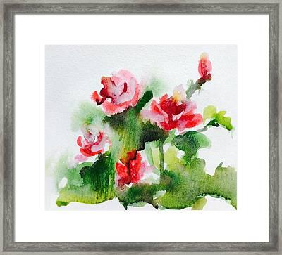 Roses Garden 3 Framed Print