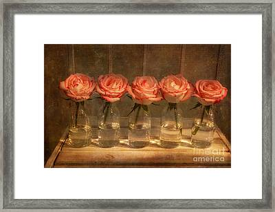 Roses In A Row Framed Print