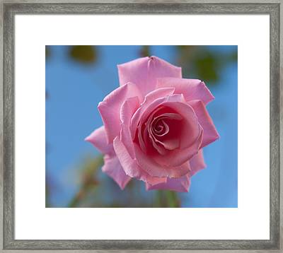 Roses In The Sky Framed Print by Miguel Winterpacht
