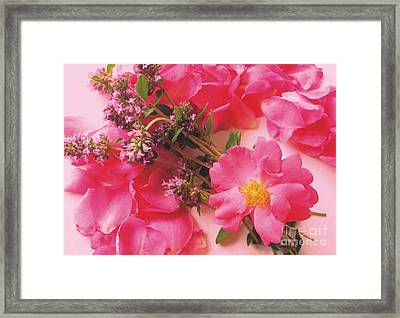 Roses In Thyme Framed Print by Margaret Newcomb