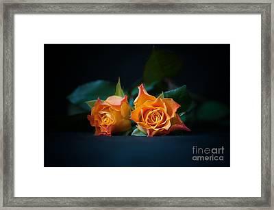 Roses Framed Print by Jaroslaw Oleksyk