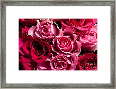Framed Print featuring the photograph Roses by Matt Malloy