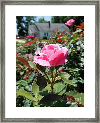 Roses Near A Country House Framed Print by Eloise Schneider
