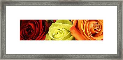 Roses Of Different Colors Framed Print by Bruce Bley