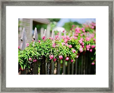 Roses On Film Framed Print by Linda Unger