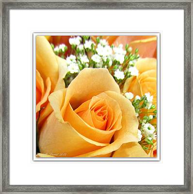 Roses Orange Blossoms Framed Print by Danielle  Parent