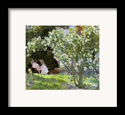 Rosebush Framed Prints