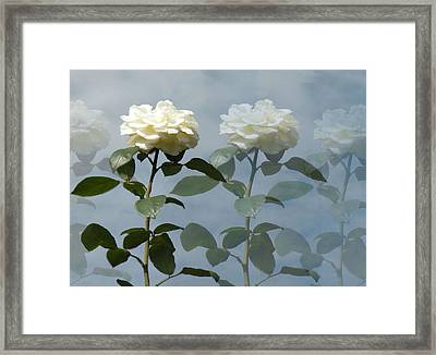 Roses Roses And More Roses Framed Print by Rosalie Scanlon