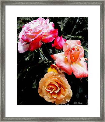 Framed Print featuring the photograph Roses Roses Roses by James C Thomas