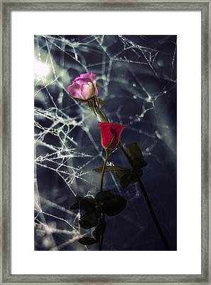 Roses With Coweb Framed Print by Joana Kruse
