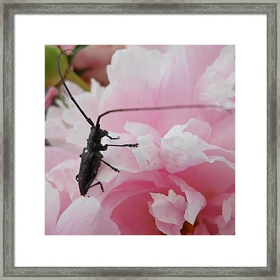 Rosey Antenna Reception Framed Print