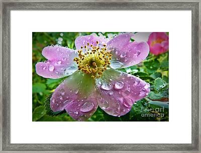 Rosey Raindrops Framed Print