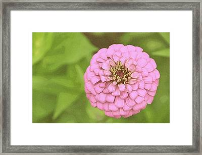 Rosy Corsage Framed Print by JAMART Photography