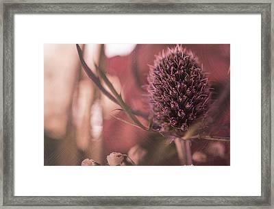 Rosy Haze  Framed Print by Maibel  Ziello