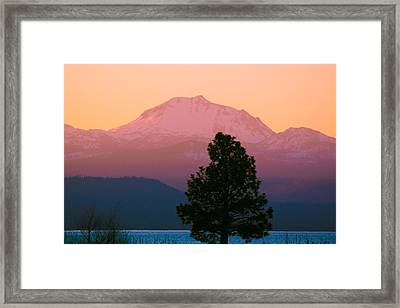 Rosy Lassen Framed Print by Jan Davies