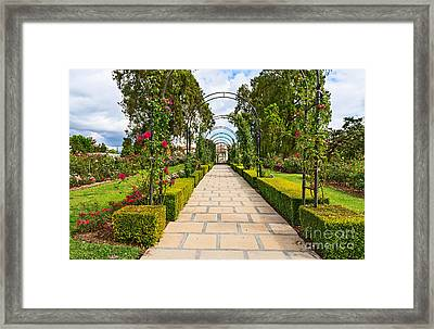 Rosy Path Framed Print