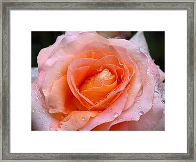 Rosy Rose Framed Print by Juergen Roth
