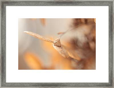 Rotation Framed Print by Connie Handscomb
