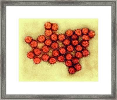 Rotavirus Particles Framed Print
