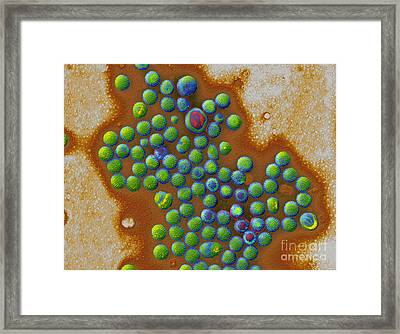 Rotaviruses Framed Print by Eye of Science