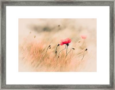 Red Poppy In The Field Framed Print