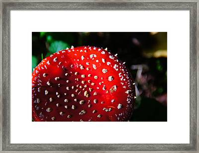 Rotes Framed Print