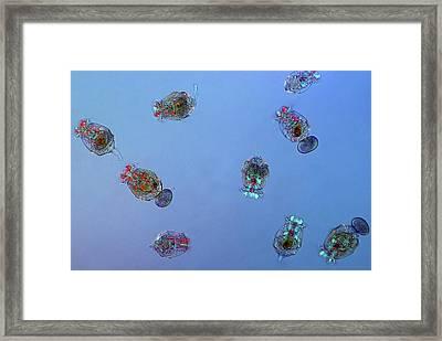 Rotifers Framed Print